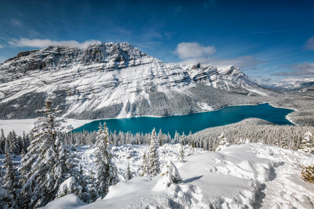 Banff National Park Peyto Lake with reflection at Banff National Park, Canada. banff national park stock pictures, royalty-free photos & images