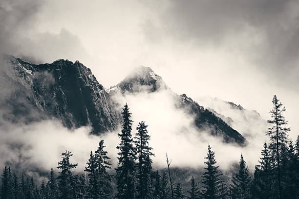 banff national park - trees in mist stock pictures, royalty-free photos & images