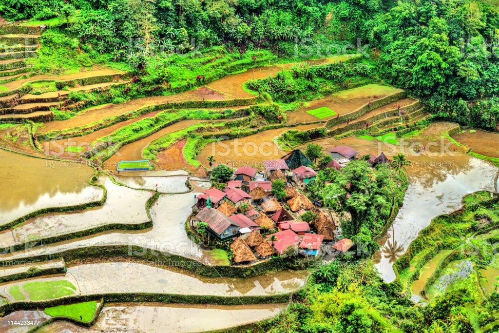 Terrazas De Arroz Bangaanluzon Filipinas Foto De Stock Y Más