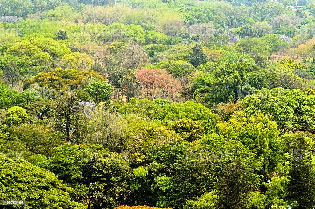 bangalore trees royalty-free stock photo
