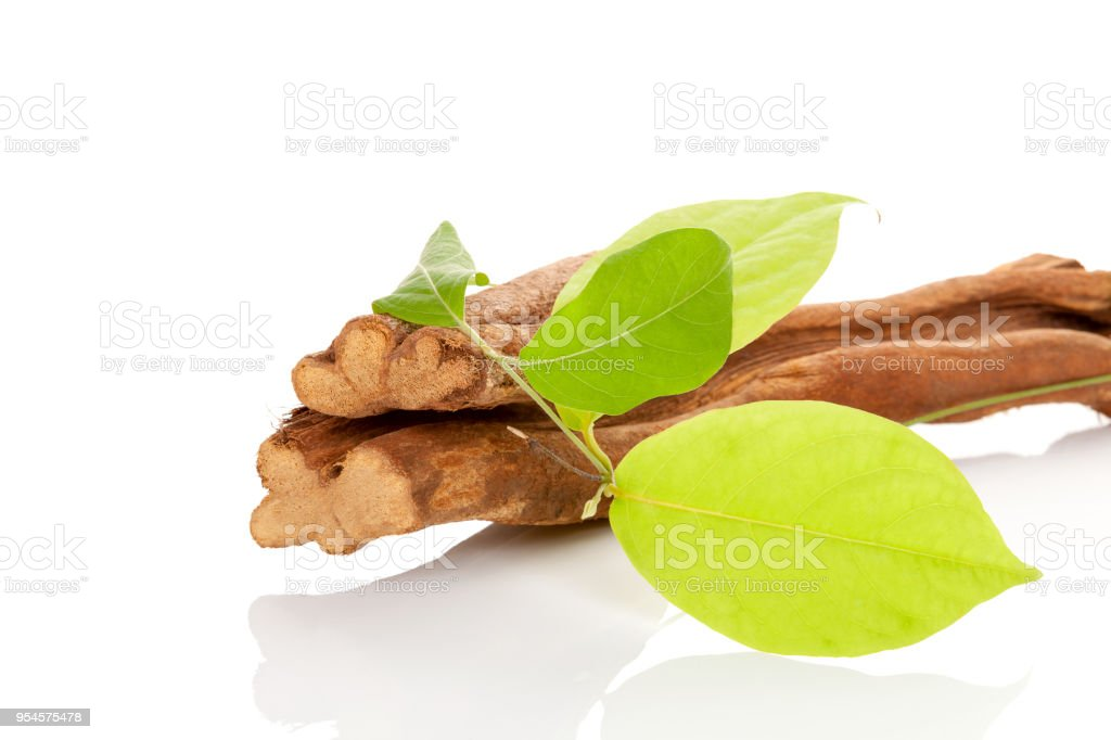 Banisteriopsis caapi wood and leaves. stock photo