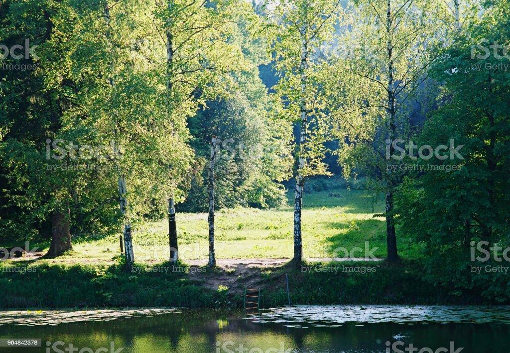 Bank of park pond landscape background royalty-free stock photo