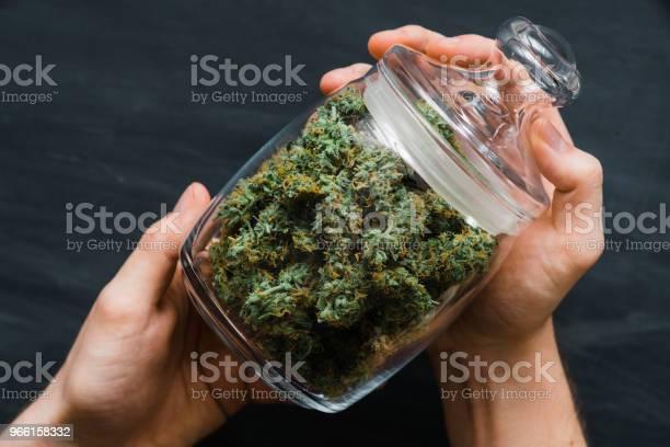 Una Banca Con Boccioli Di Cannabis Freschi Nelle Mani Di Un Uomo Un Sacco Di Marijuana Concetti Di Legalizzazione Dellintivata Vista Dallalto Da Vicino - Fotografie stock e altre immagini di Assuefazione