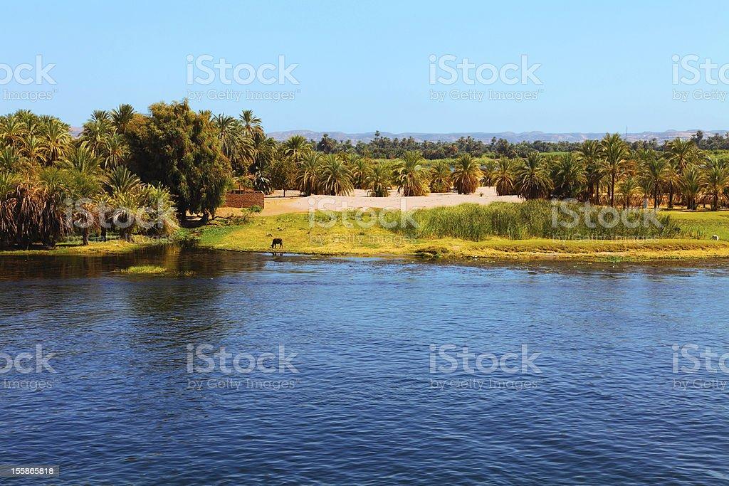 Ufern des Nil – Foto