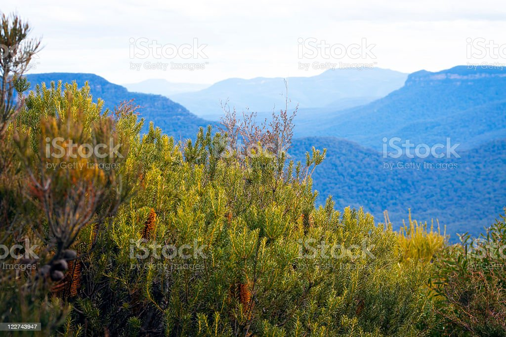 Banksia shrubs and view of mountains covered with blue haze royalty-free stock photo