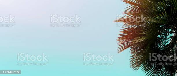 Banner and website header with copy space in blue color and palm tree picture id1174427156?b=1&k=6&m=1174427156&s=612x612&h=yromfnlv1zf9xbtbwul5ar3jsnbaotptv vd9ctz8zo=