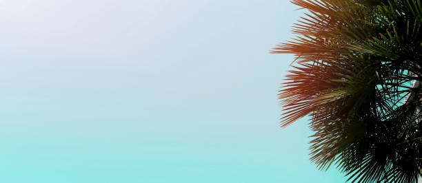 Banner and website header with copy space in blue color and palm tree picture id1174427156?b=1&k=6&m=1174427156&s=612x612&w=0&h=8s39ik4cbtdjs3zefoo5p6vjxdmcnnweuen9uwftwfs=