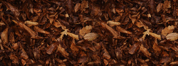 Banner autumn background old leaves selective blurred background picture id1278668618?b=1&k=6&m=1278668618&s=612x612&w=0&h=en ak ycdenmuoju kmwhowcfsaeekonzt9yrehl6jo=