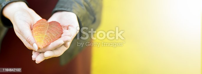 istock Banner. Autumn. Leaf in the hands of girls. One red autumn leaf in the hands of girls. In the palm of an autumn leaf. Hands in the form of hearts 1164642102