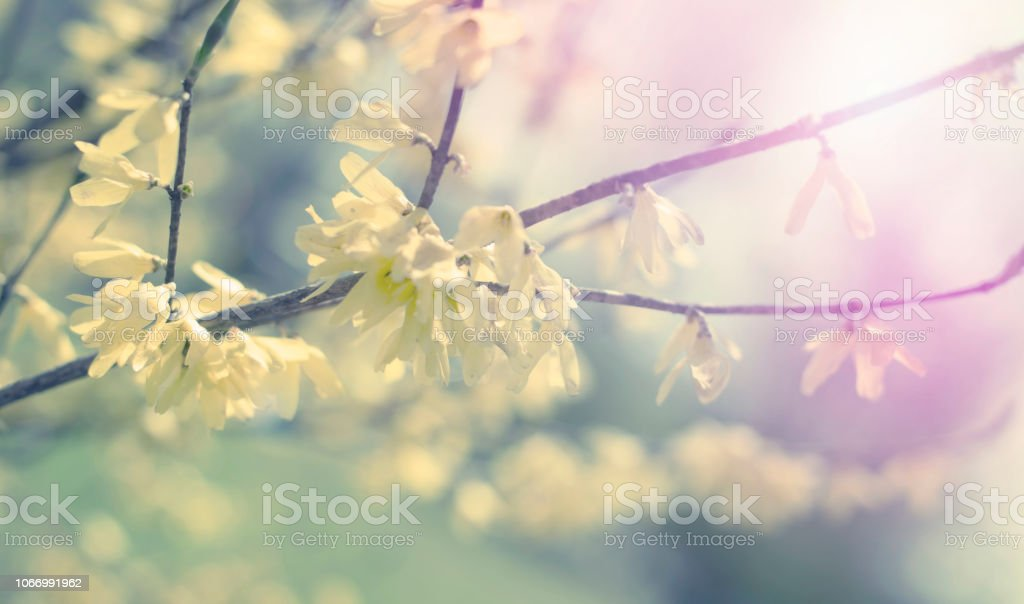 Banner Beautiful birch tree branch with green leaves in the sky. stock photo