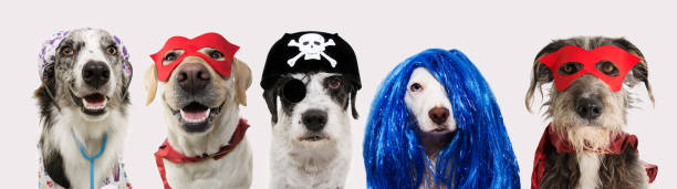 Banner five dogs celebrating carnival halloween new year wearing hat picture id1192348655?b=1&k=6&m=1192348655&s=612x612&w=0&h=rvuagosakkfezi2nc 82gvwmknkpupxdimy9dftyf5q=
