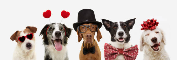 banner five dogs celebrating valentine's day with a red ribbon on head and a heart shape diadem or glasses, top hat and bowtie. isolated against white background. banner five dogs celebrating valentine's day with a red ribbon on head and a heart shape diadem or glasses, top hat and bowtie. isolated against white background. diademe stock pictures, royalty-free photos & images