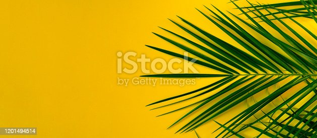 1153498948 istock photo Banner for the site in orange with palm branches. 1201494514