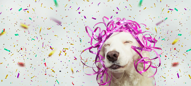 Banner happy dog present for new year, carnival, christmas, birthday with pink serpentines on head. isolated against gray background with confetti falling
