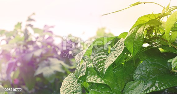 istock Banner Natural green bushes fresh leaves in sunlight autumn Bright rich background selective focus toning 1056519772