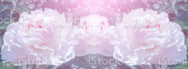 Banner natural pink background picture id1192718693?b=1&k=6&m=1192718693&s=612x612&h=ota1gyykfrpqek1c7dc1xgcd2svp8zkhmjivwf1dr20=