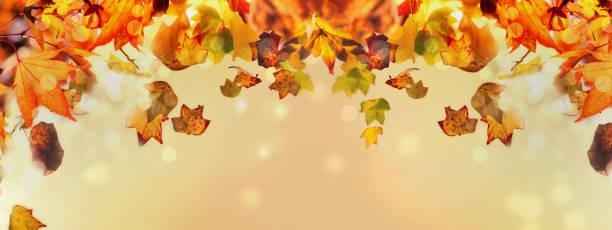 estandarte de hermosa y colorida hoja otoñal - foto de stock