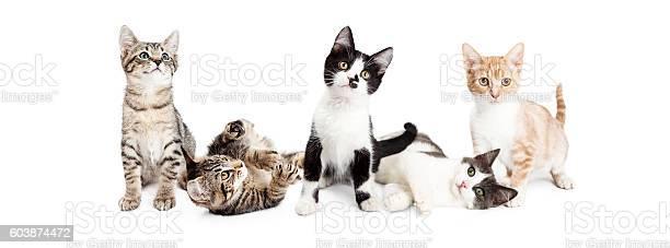 Banner of cute playful kittens picture id603874472?b=1&k=6&m=603874472&s=612x612&h=g1rxdit fb1s8vghwf2 cvnlpziqzqk1hpkz0pnjpdy=