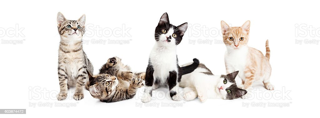 Banner of Cute Playful Kittens stock photo