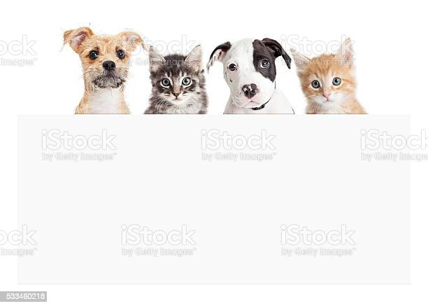 Banner of puppies and kittens over blank sign picture id533460218?b=1&k=6&m=533460218&s=612x612&h=jr7scslqhmyisqwfkvs lkzwbc1019vljwelufegwok=