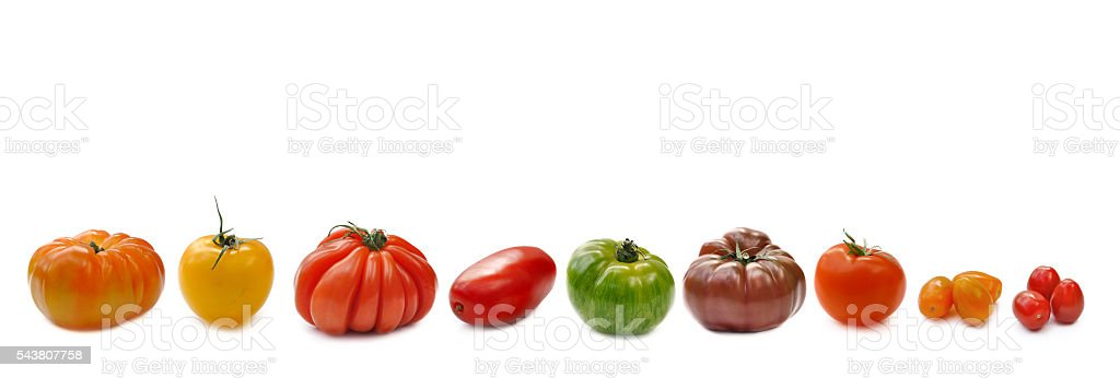 banner of tomatoes stock photo