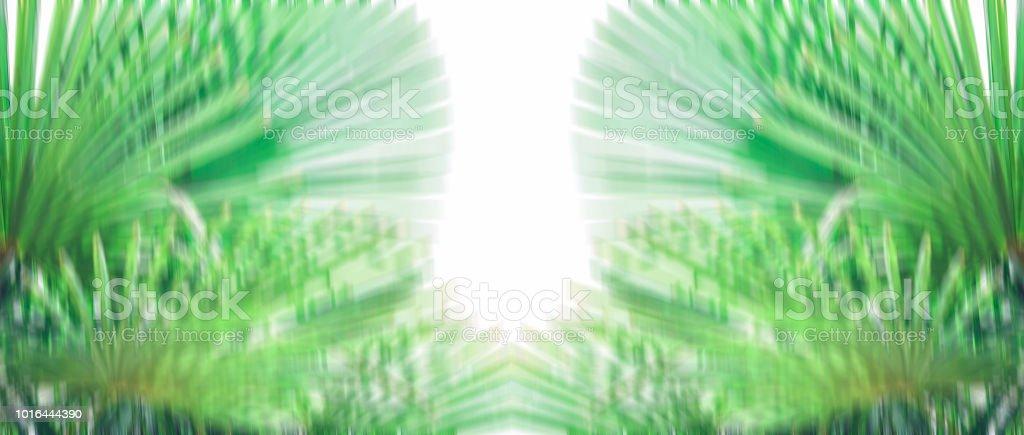 Folhas de palmeira bandeira contra o céu Tropical fundo cores brilhantes ensolarado turva backgraund - foto de acervo
