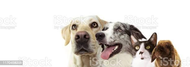 Banner pets two dogs side profile of a labrador retriever cat rabbit picture id1170458005?b=1&k=6&m=1170458005&s=612x612&h=dgkg3peaqqdz8olzjvjgwtfo5hfwf6lwin6ohn2ahx8=