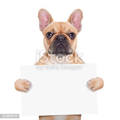 istock banner placard dog 523693197