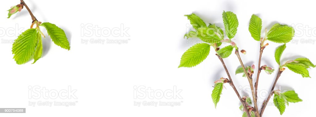 banner spring background of thin tree branches stock photo