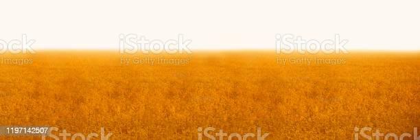 Banner wheat field concept rich harvest picture id1197142507?b=1&k=6&m=1197142507&s=612x612&h=zxd33pw4dnvo rxw56slfkrvfhnjibbny4czwi0nxk4=
