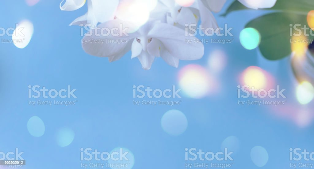 Banner White Orchid on a blue background. - Royalty-free Affectionate Stock Photo