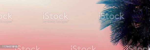 Banner with copy space in light pink color and palm tree picture id1174411915?b=1&k=6&m=1174411915&s=612x612&h=7lfdkcp1mutcusqit9yptqjc4hhhgzlobqfjerdel g=