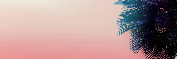 Banner with copy space in light pink color and palm tree picture id1174411915?b=1&k=6&m=1174411915&s=612x612&w=0&h=zmrlfgwhw7fdkwe8vvdcibnnofi3tmbxrvvowkgg7s8=