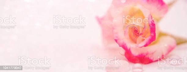 Banner with pink rose picture id1041779342?b=1&k=6&m=1041779342&s=612x612&h=vqnzanipaxhc3hd3sljqs7ckvkonui0io55ynvcdnce=