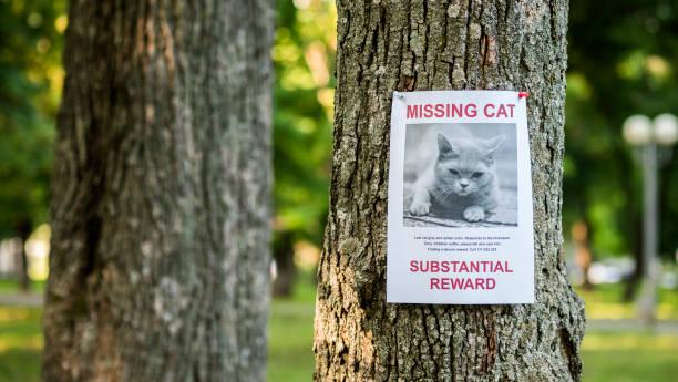 banner mit der bekanntgabe der vermissten katze, die an einem baum im park hängt - suche katze stock-fotos und bilder