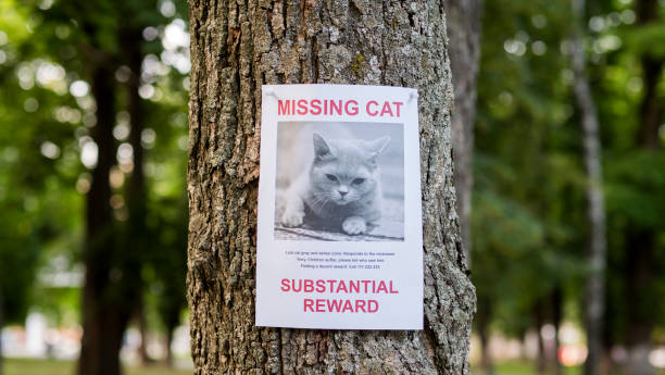banner with the announcement of the missing cat hanging on a tree in the park - lost стоковые фото и изображения