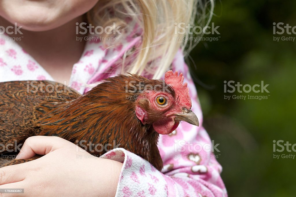 Bantam Cochin and girl stock photo