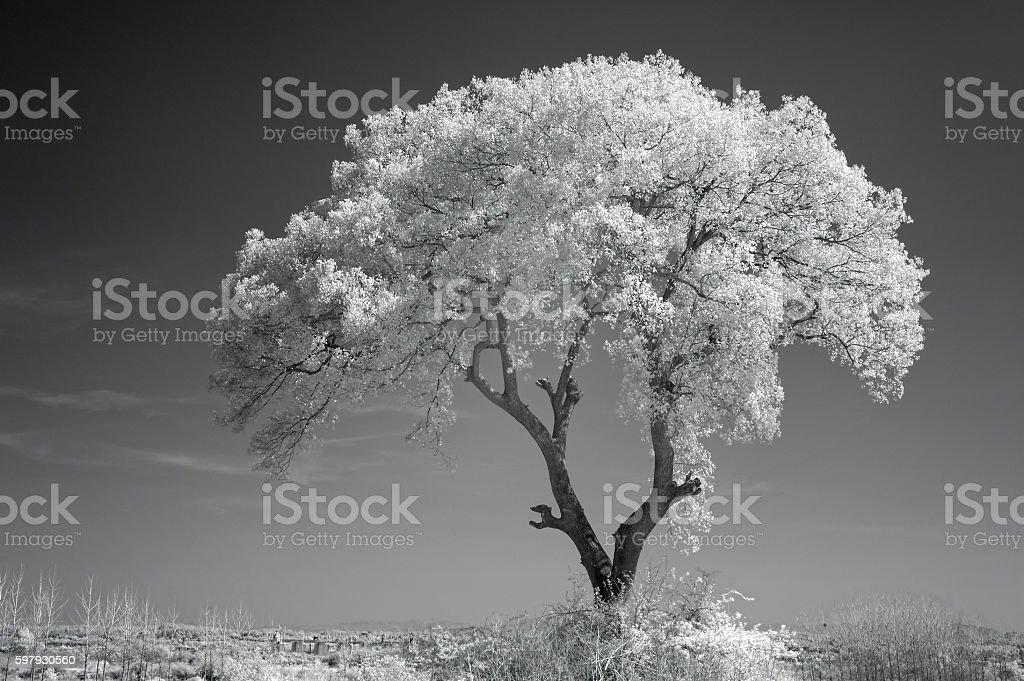 Banyan tree in summer stock photo