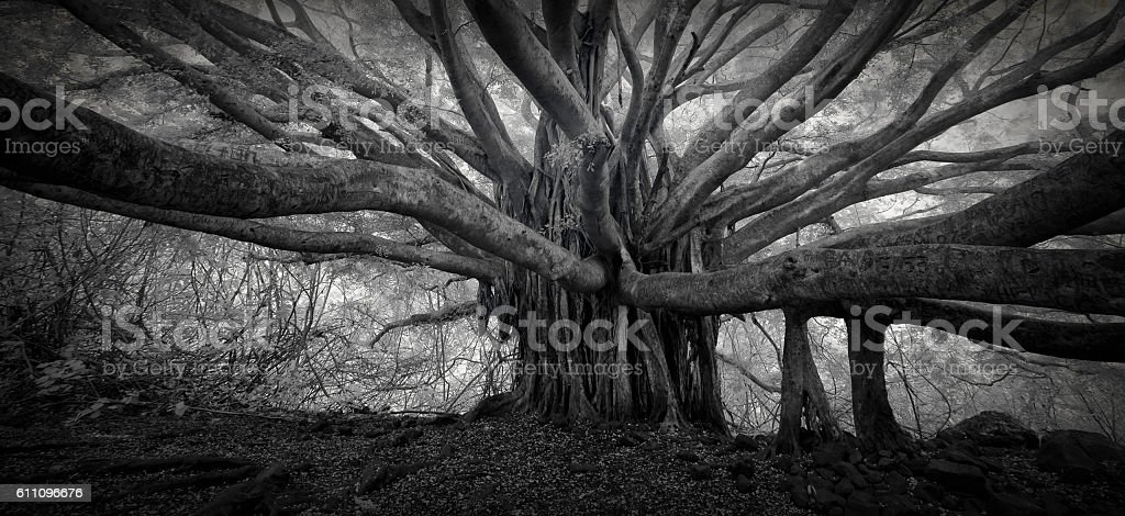 Banyan Tree Infrared stock photo
