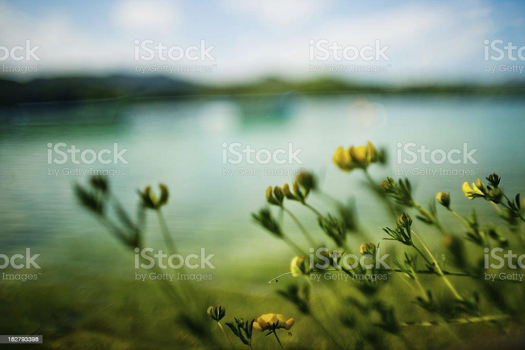 Banyoles lake and flowers stock photo