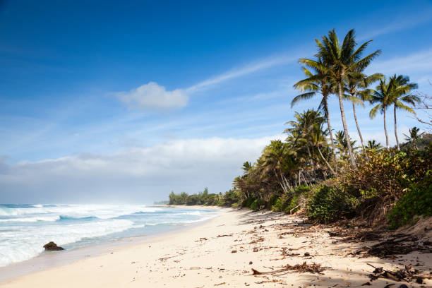 Banzai Pipeline Sunny Beach Landscape stock photo
