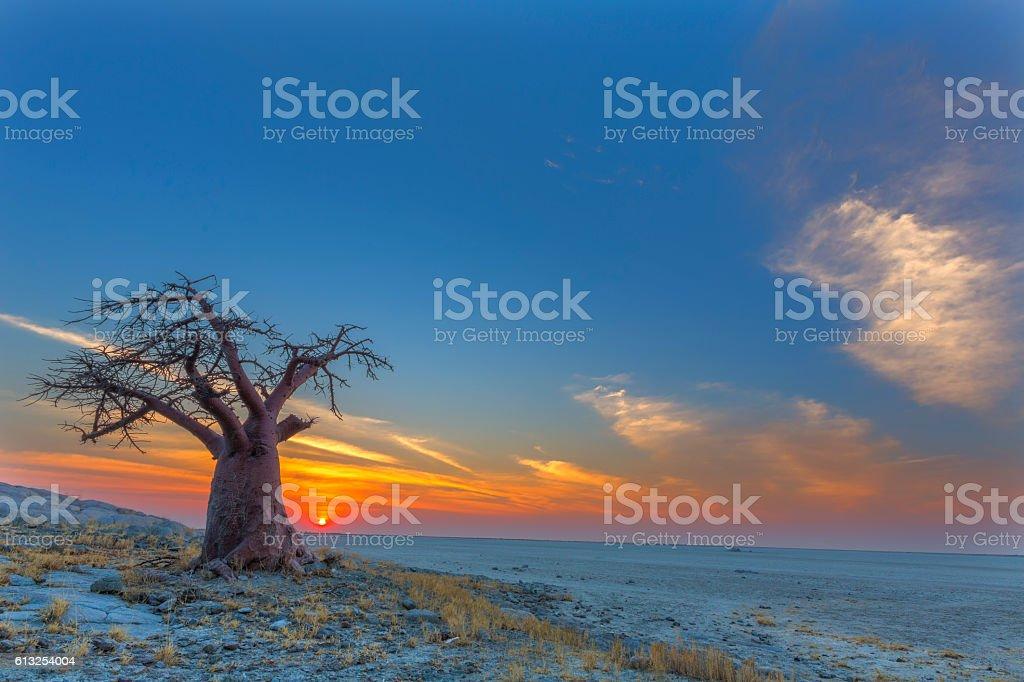 Affenbrotbaum bei Sonnenuntergang – Foto