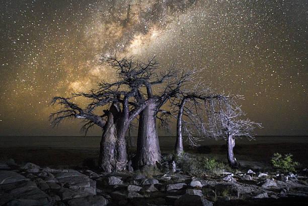 Baobab Tree on Kubu Island