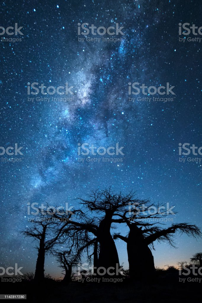 Baobab tree under the stars in Botswana.
