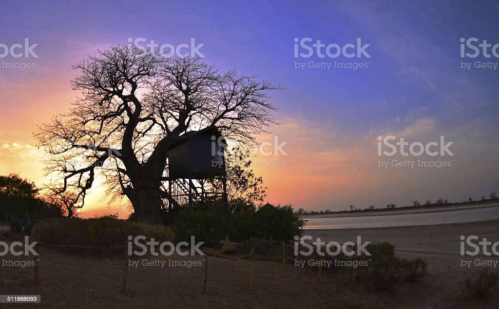 Baobab Treehouse stock photo