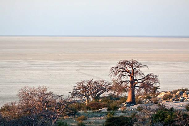 Baobab trees next to large salt pan