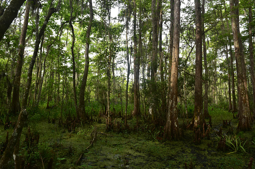 Barataria Preserve in New Orleans