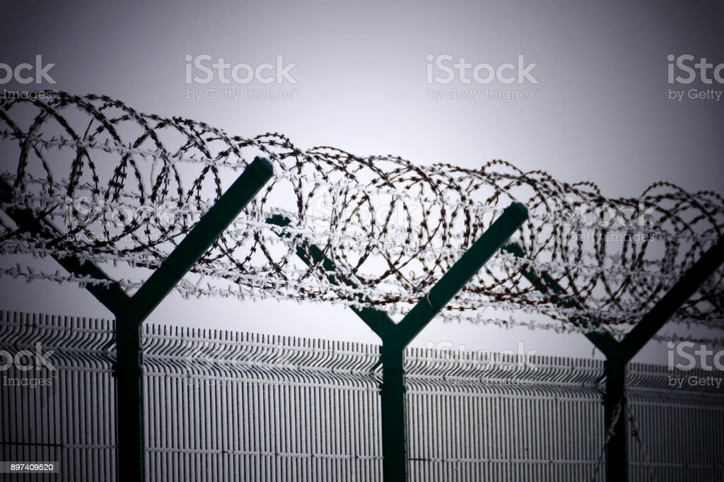 Barb wire fence at the cold winter day stock photo