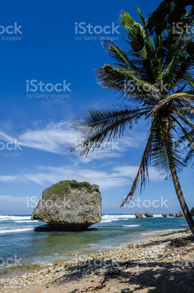 Barbados, Bathsheba coral reef boulder stock photo