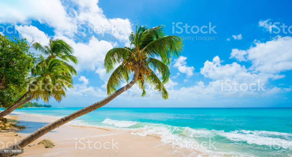 Barbados Beach with Turquoise Sea and Palm Trees stock photo